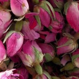 گل محمدی Damask Rose