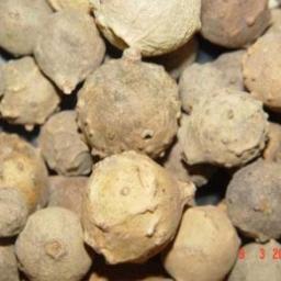 مازوج(سفید و سبز)Gallnuts