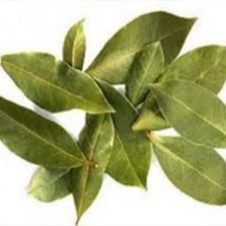 برگ مورد Myrtus